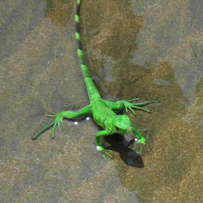 Travel tips on hiking in Corcovado National Park in Costa Rica