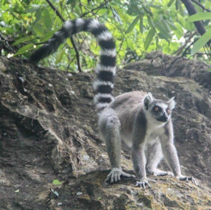 In search of Madagascar's lemurs and exploring the beauty of Isalo National Park
