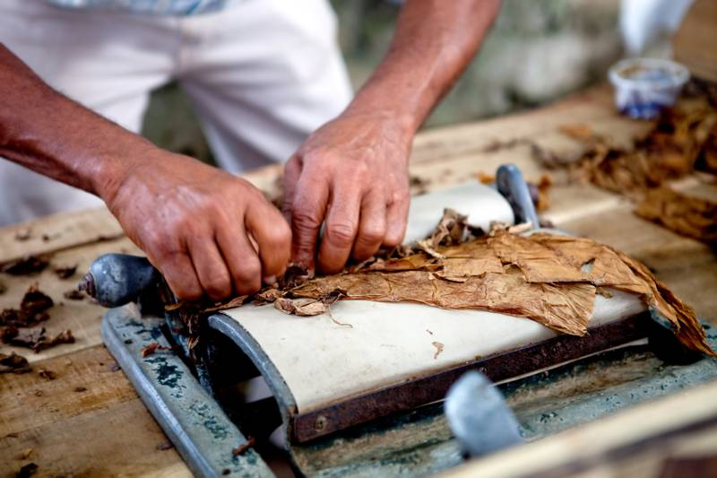 Man processing the tobacco leaves and making cigars, Cuba