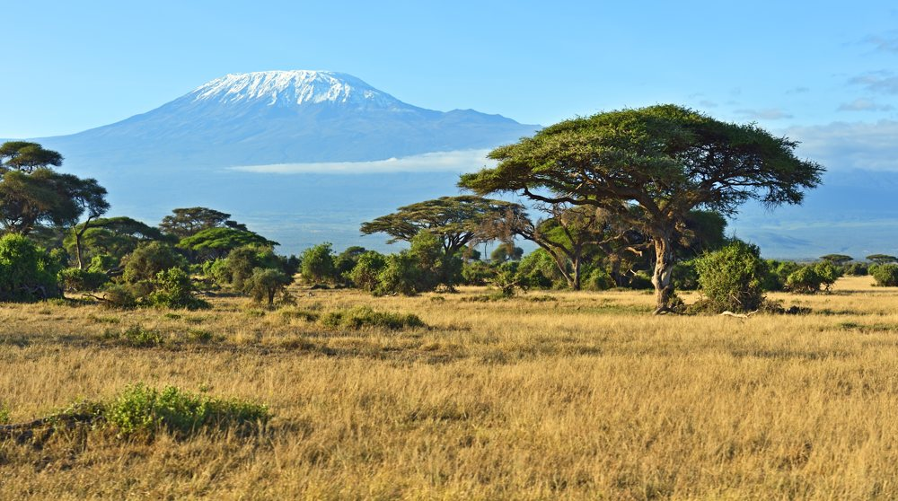 Kilimanjaro mount, a view from savannah