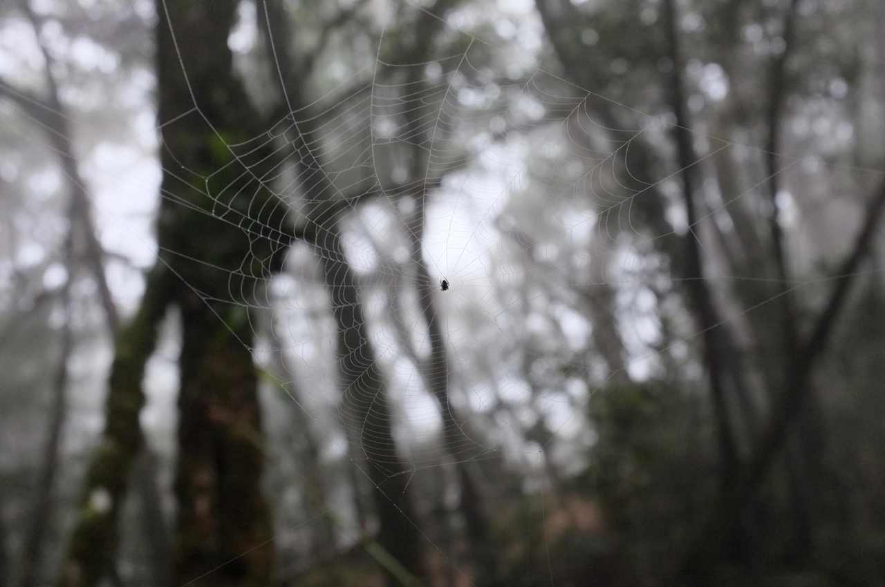 Spider web in the Kinabalu forest