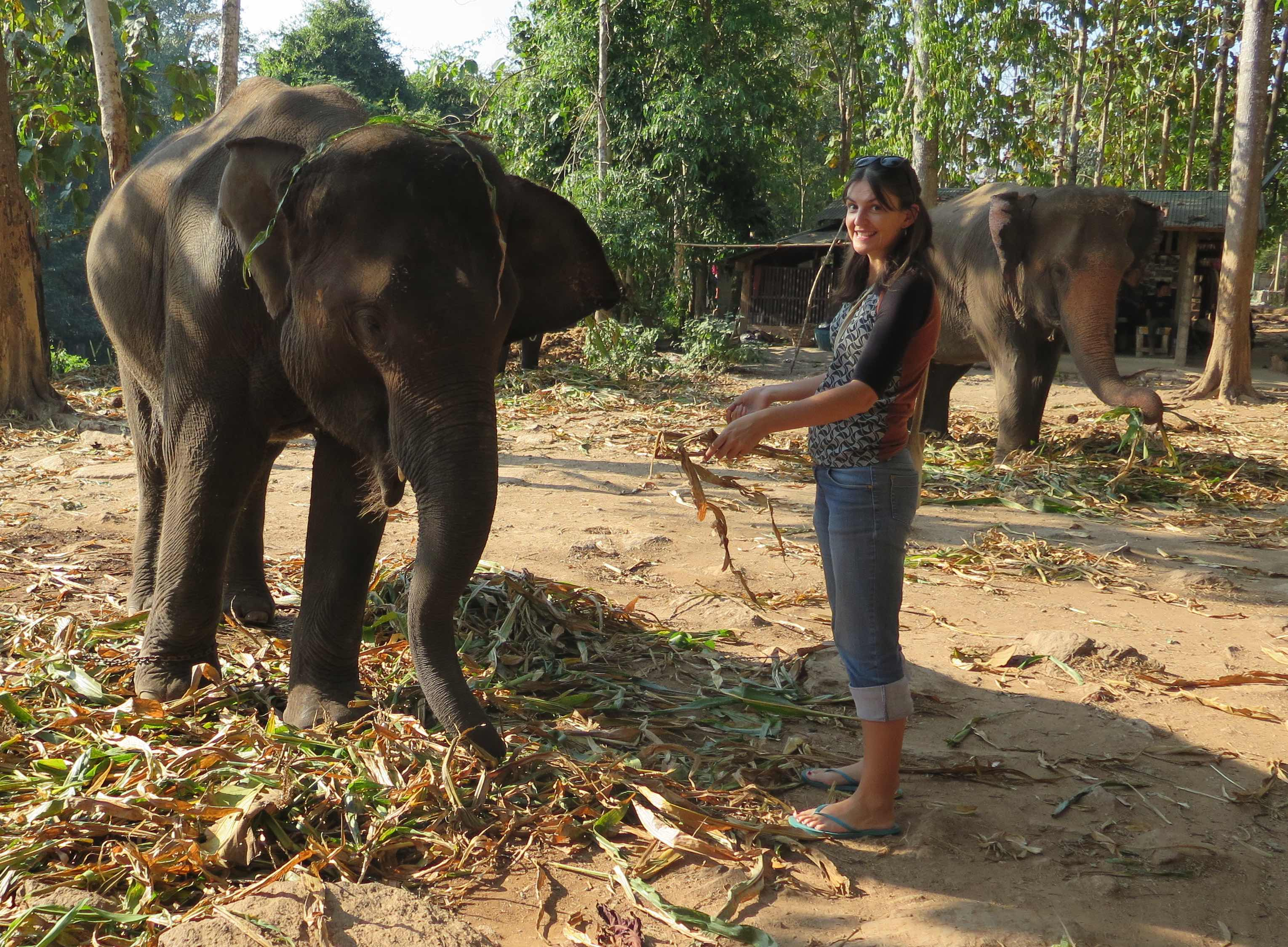 Elephant adventure in Thailand