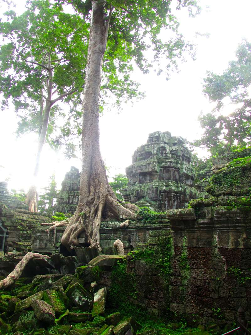 The King of Trees at Ta Prohm